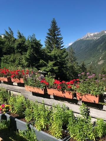 Vue du Jardin alpin - Restaurant Les Tables de Philippe Chamonix Mont-Blanc